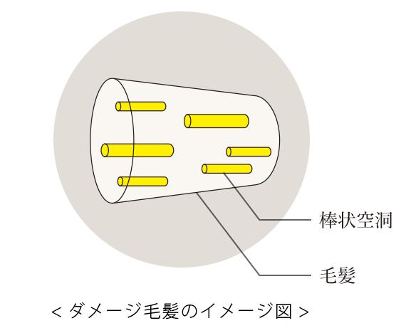 ダメージ毛髪のイメージ図